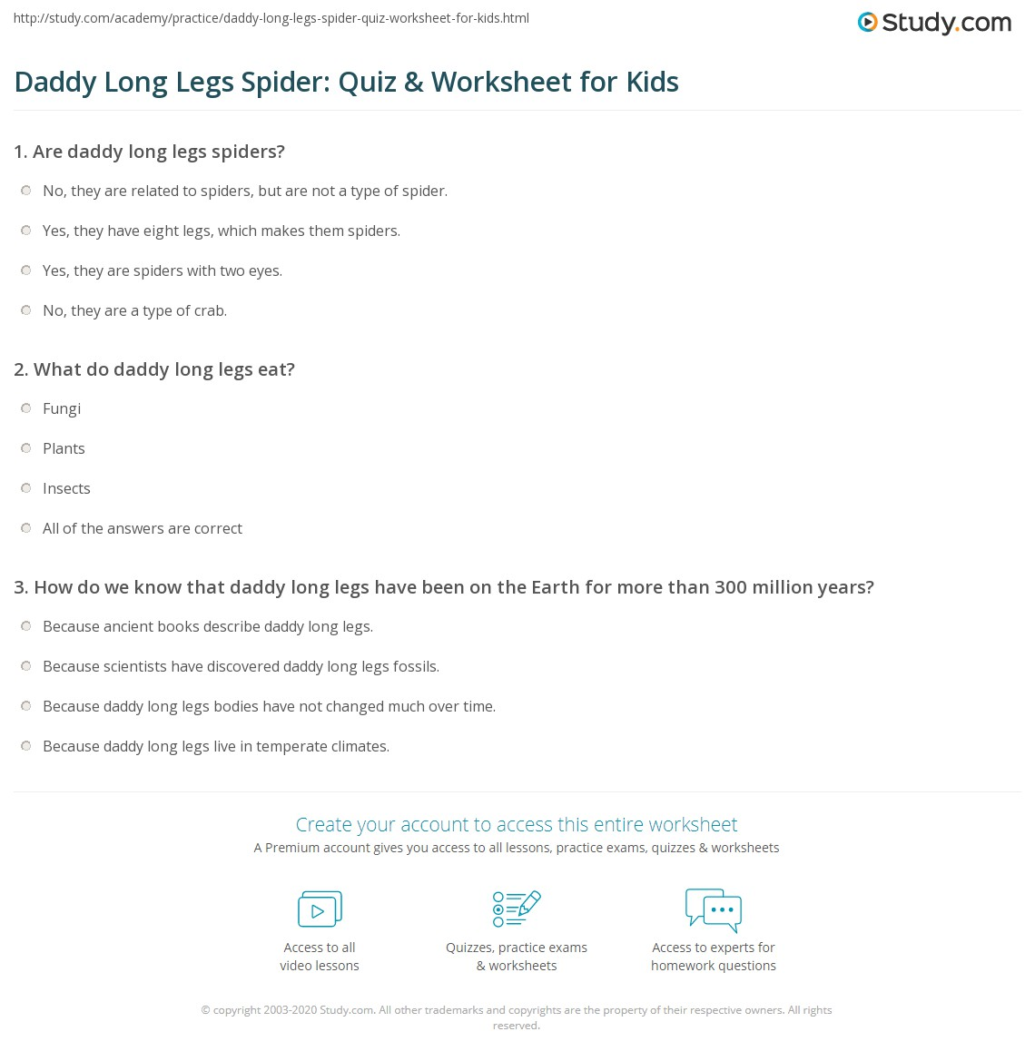 Daddy Long Legs Spider Quiz Amp Worksheet For Kids