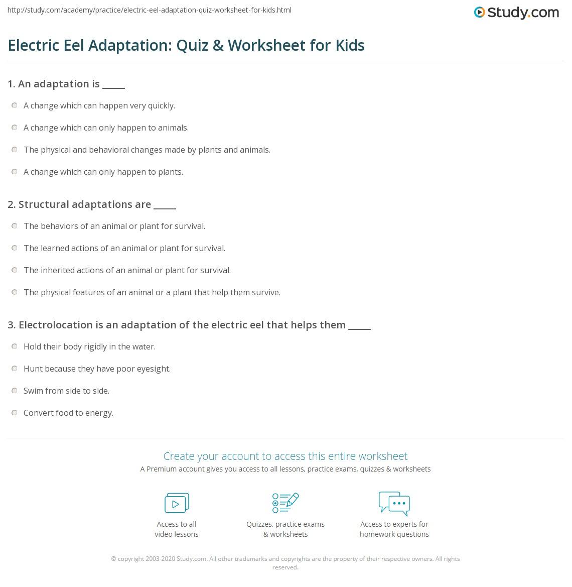 Electric Eel Adaptation Quiz Amp Worksheet For Kids