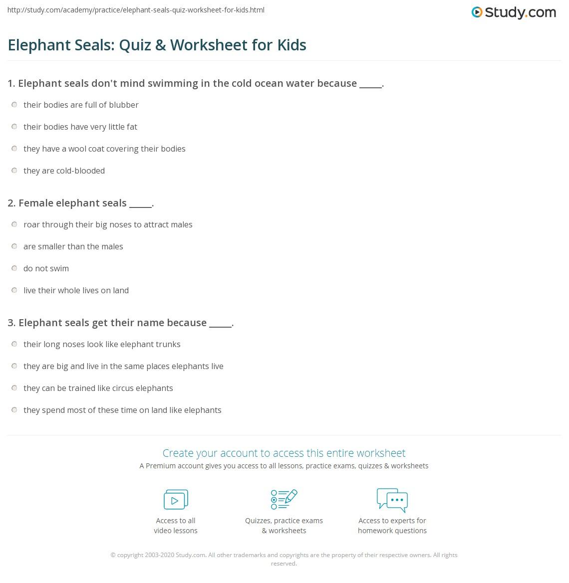 Elephant Seals Quiz Amp Worksheet For Kids