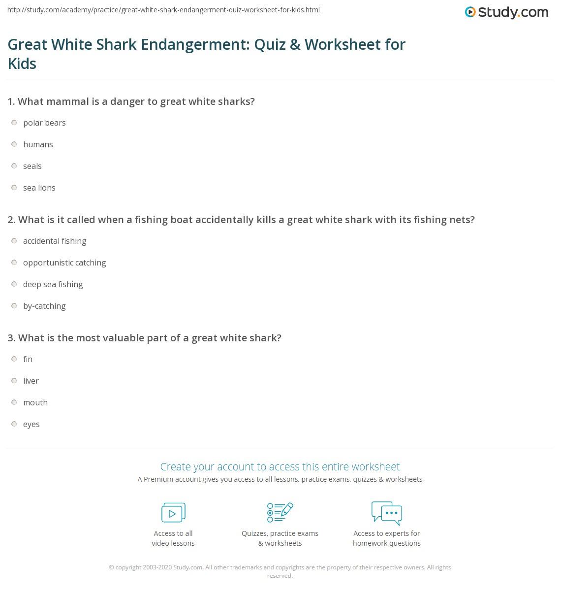 Great White Shark Endangerment Quiz Amp Worksheet For Kids