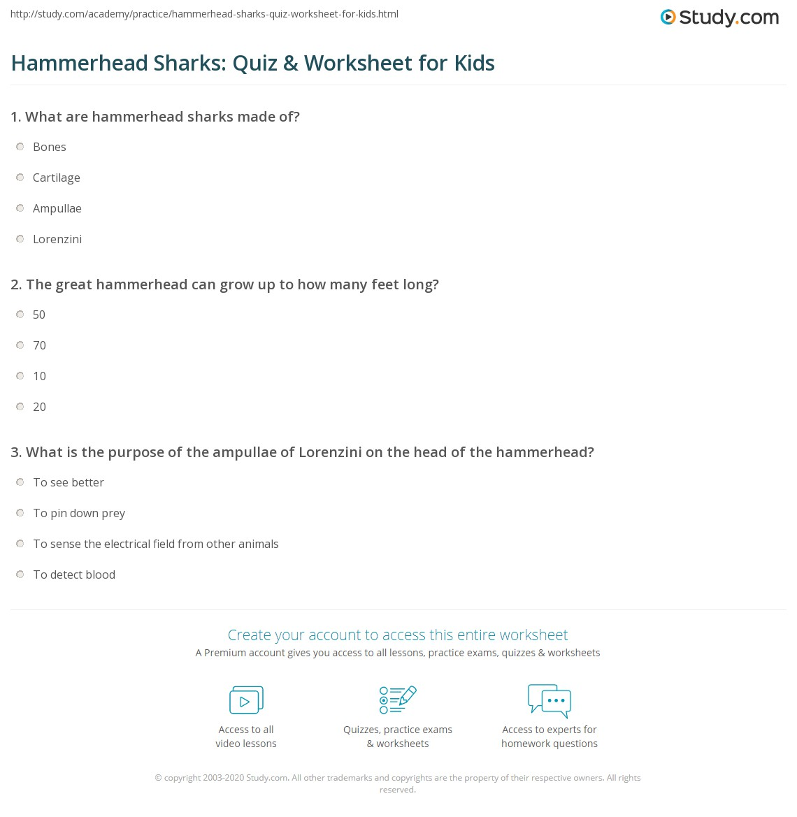 Hammerhead Sharks Quiz Amp Worksheet For Kids