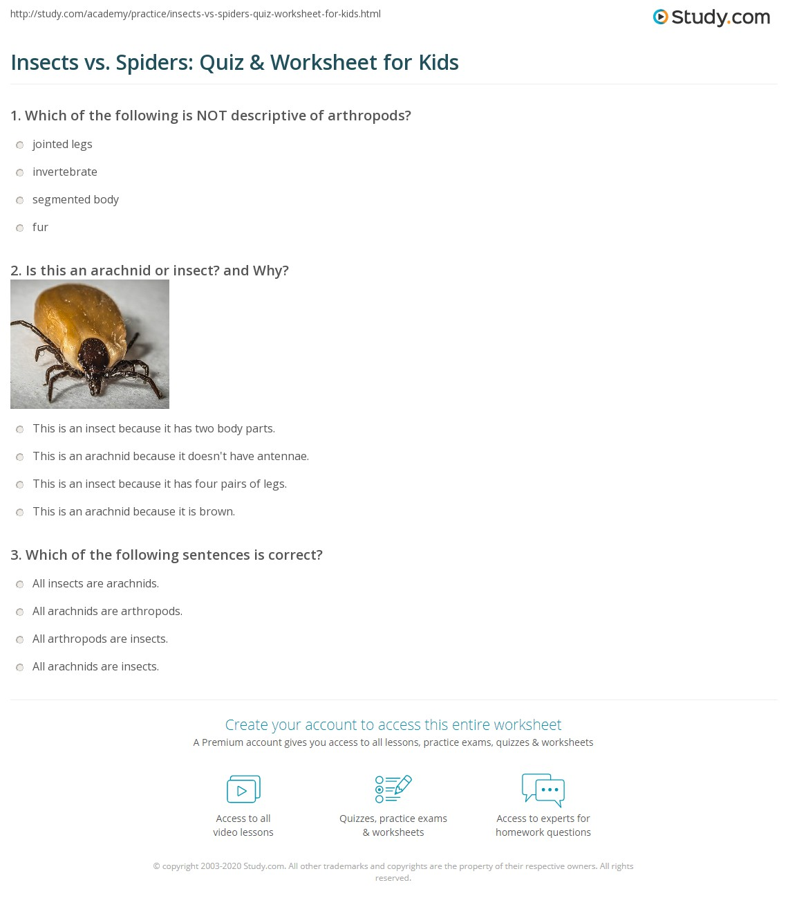Insects Vs Spiders Quiz Amp Worksheet For Kids