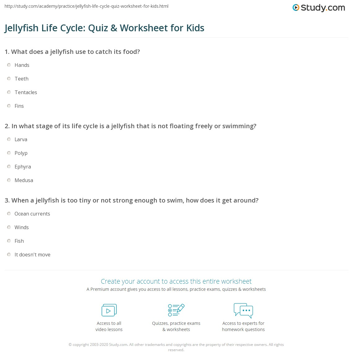 Jellyfish Life Cycle Quiz Amp Worksheet For Kids