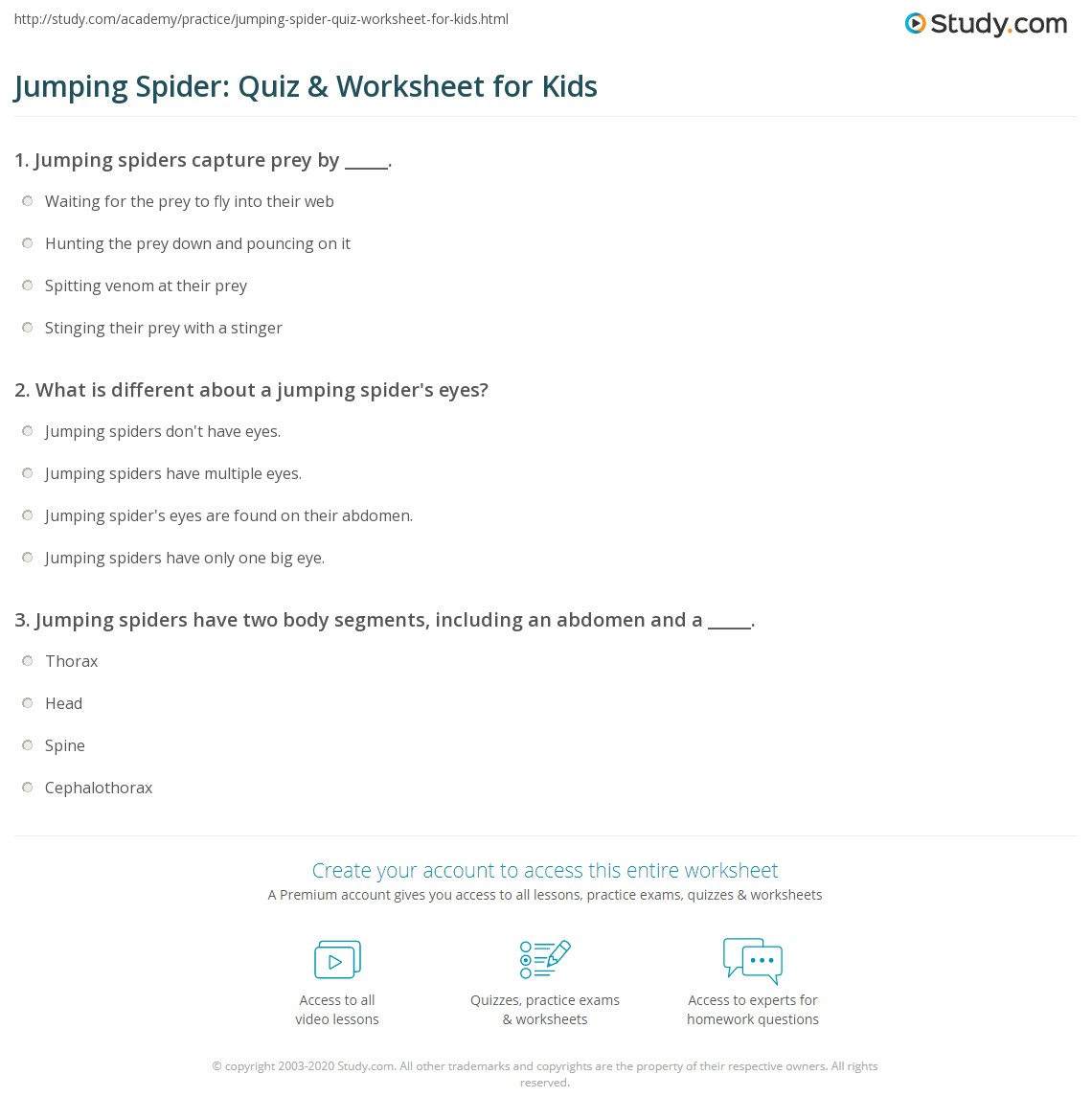 Jumping Spider Quiz Amp Worksheet For Kids