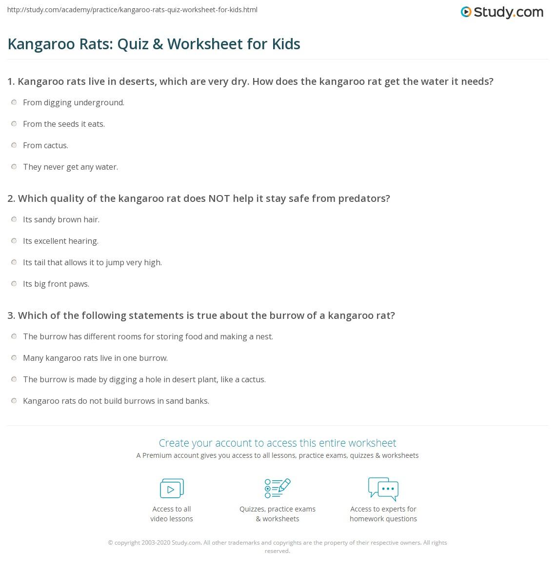 Kangaroo Rats Quiz Amp Worksheet For Kids