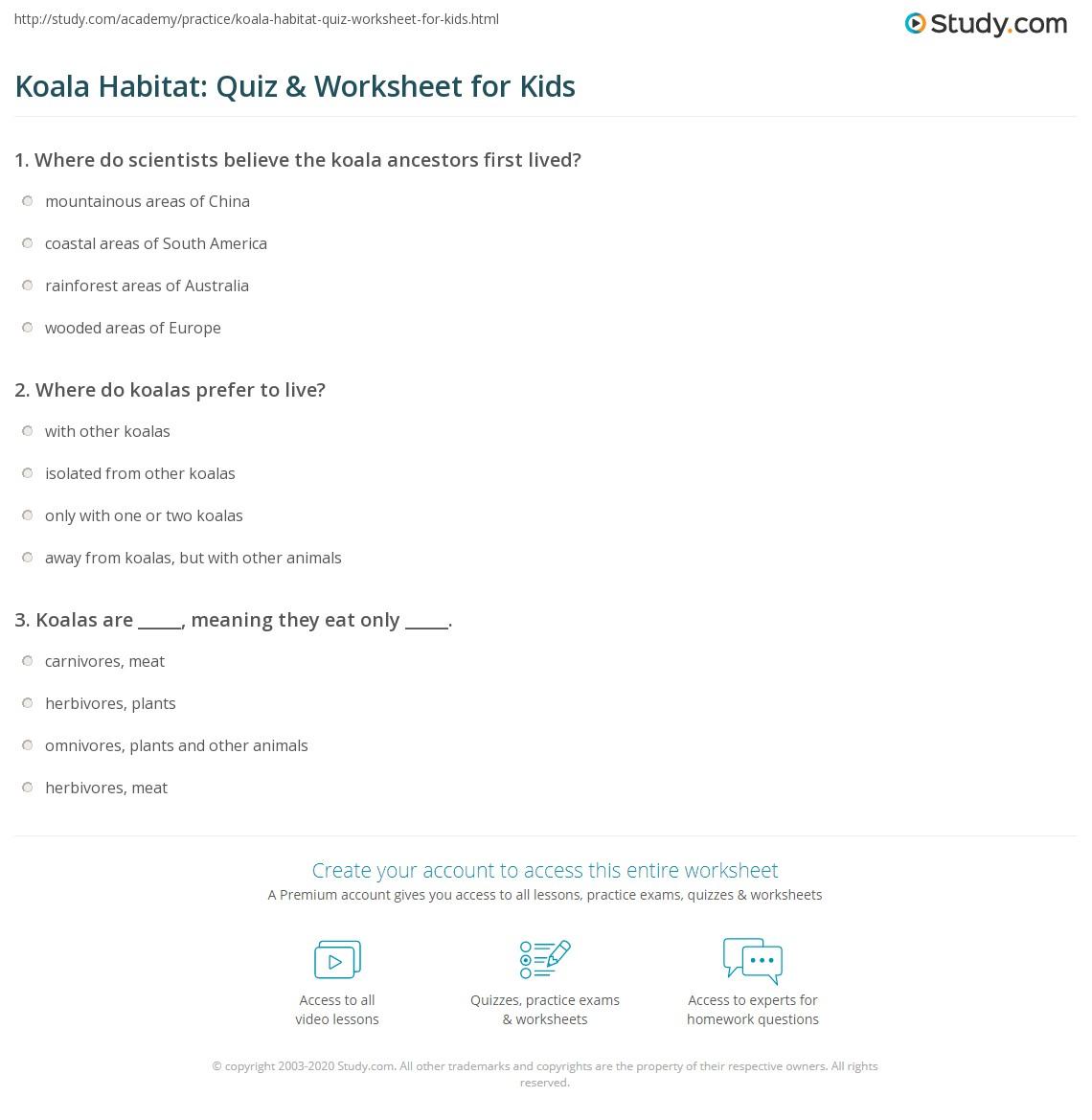 Koala Habitat Quiz Amp Worksheet For Kids