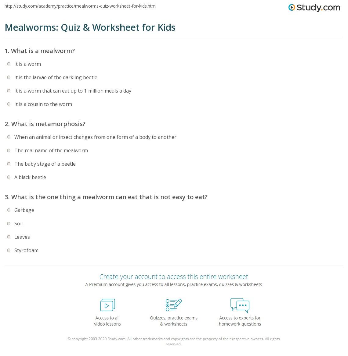 Mealworms Quiz Amp Worksheet For Kids