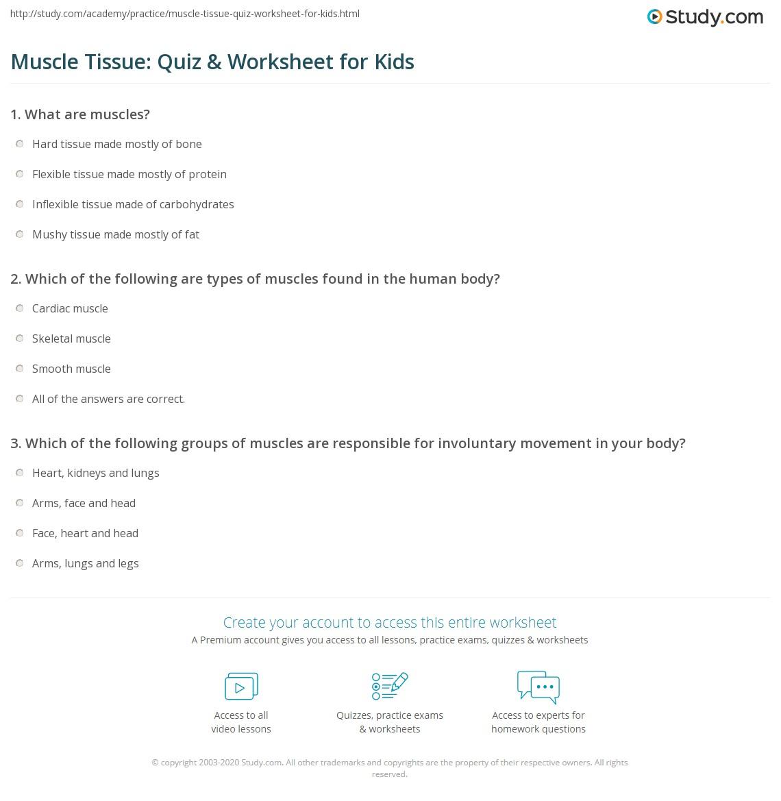 Muscle Tissue Quiz Amp Worksheet For Kids