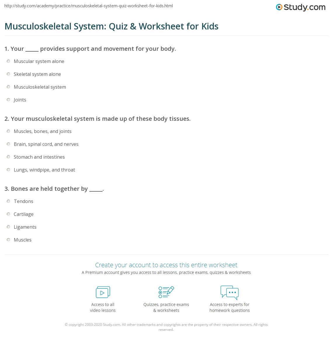 Musculoskeletal System Quiz Amp Worksheet For Kids