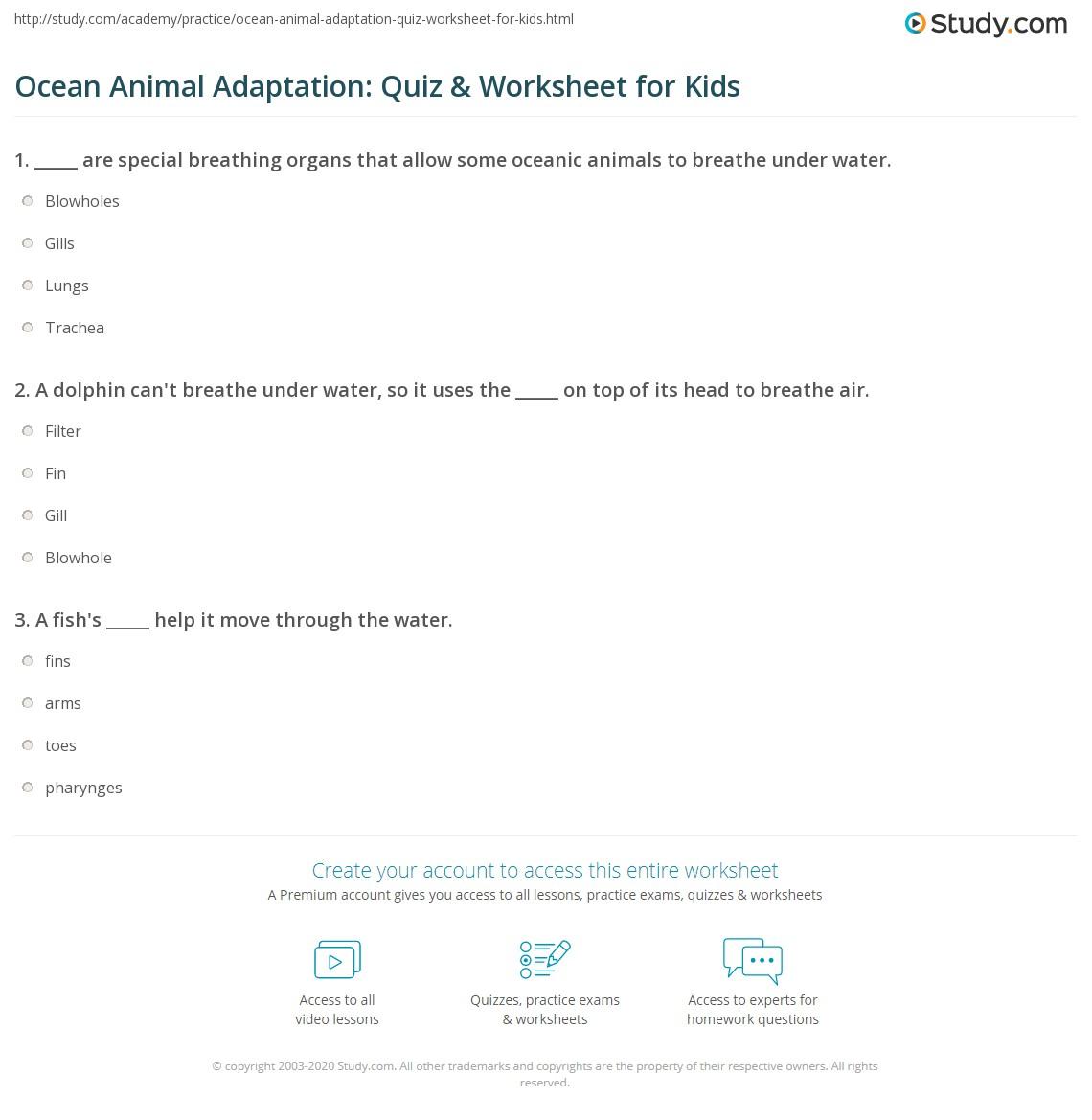 Ocean Animal Adaptation Quiz Amp Worksheet For Kids
