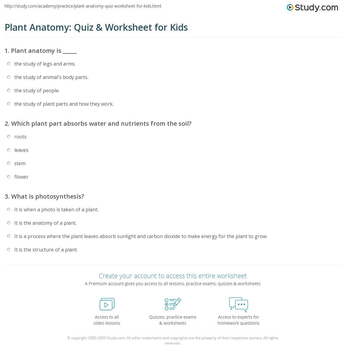 Plant Anatomy Quiz Amp Worksheet For Kids