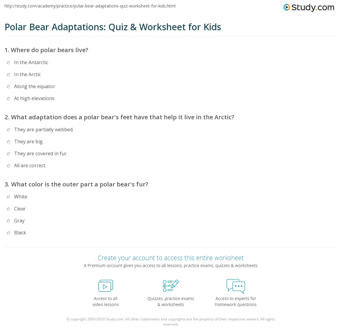 Polar Bear Adaptations Quiz Amp Worksheet For Kids