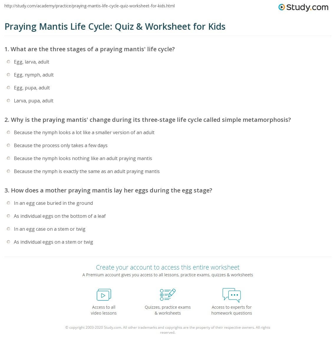 Praying Mantis Life Cycle Quiz Amp Worksheet For Kids