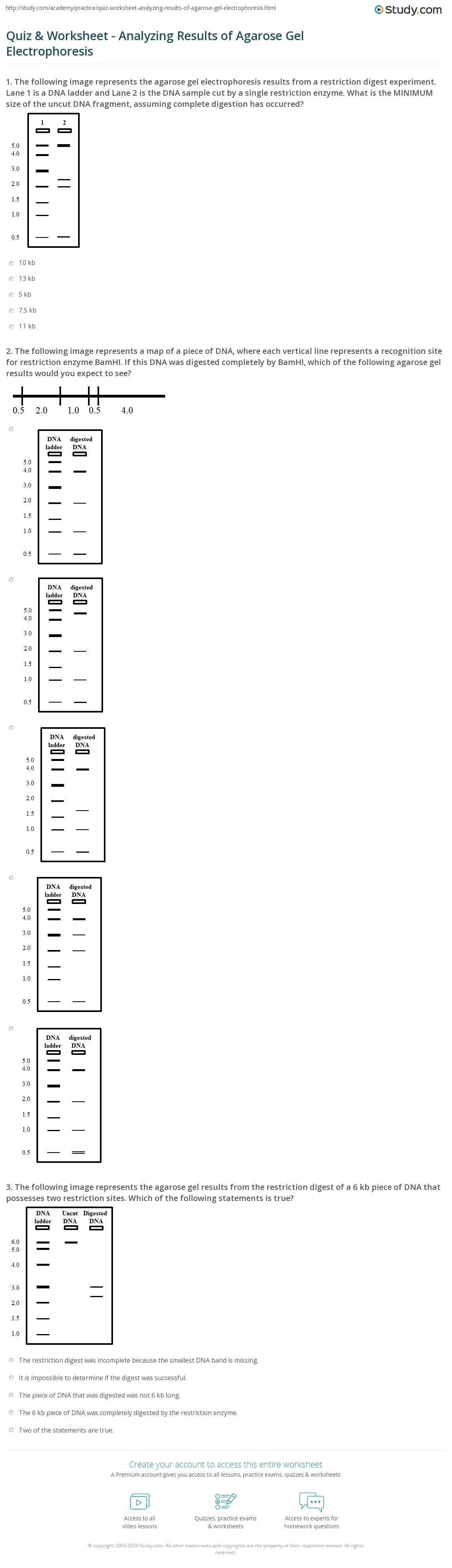 Worksheet Gel Electrophoresis Worksheet Grass Fedjp