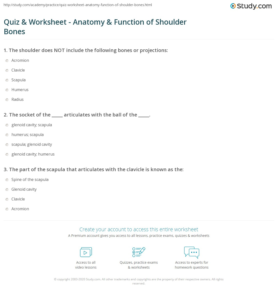 Humerus Bone Worksheet