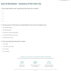 Parts Of The Ear Diagram Worksheet Ac Wiring Quiz And Anatomy Inner Study