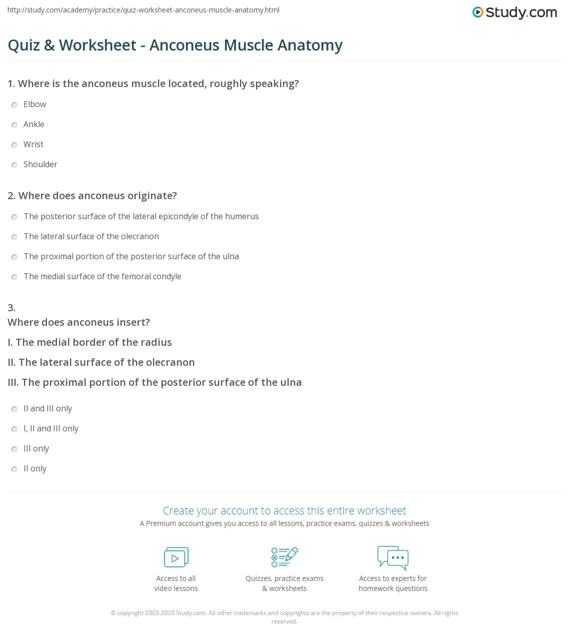 Muscle Anatomy Worksheet