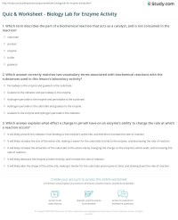 Quiz & Worksheet - Biology Lab for Enzyme Activity | Study.com