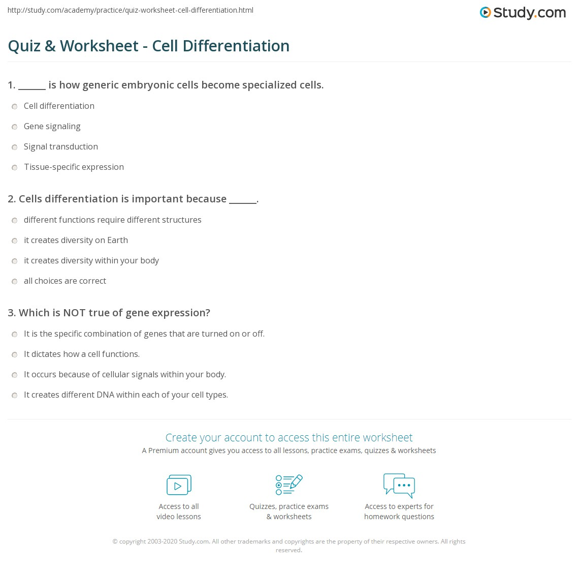 Differentiated Division Worksheets Year 5