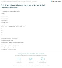 Quiz & Worksheet - Chemical Structure of Nucleic Acids ...