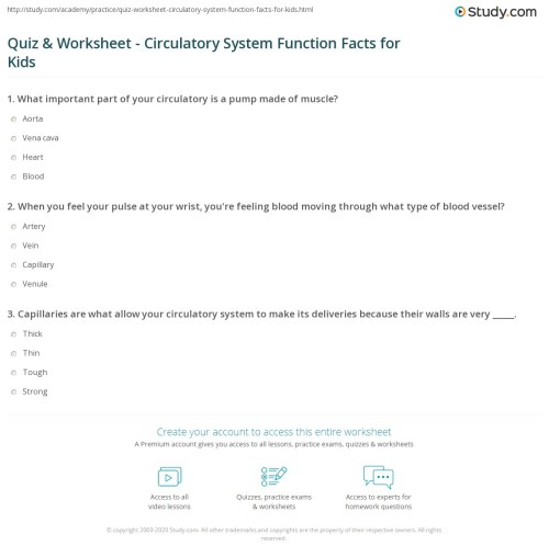 small resolution of Quiz \u0026 Worksheet - Circulatory System Function Facts for Kids   Study.com