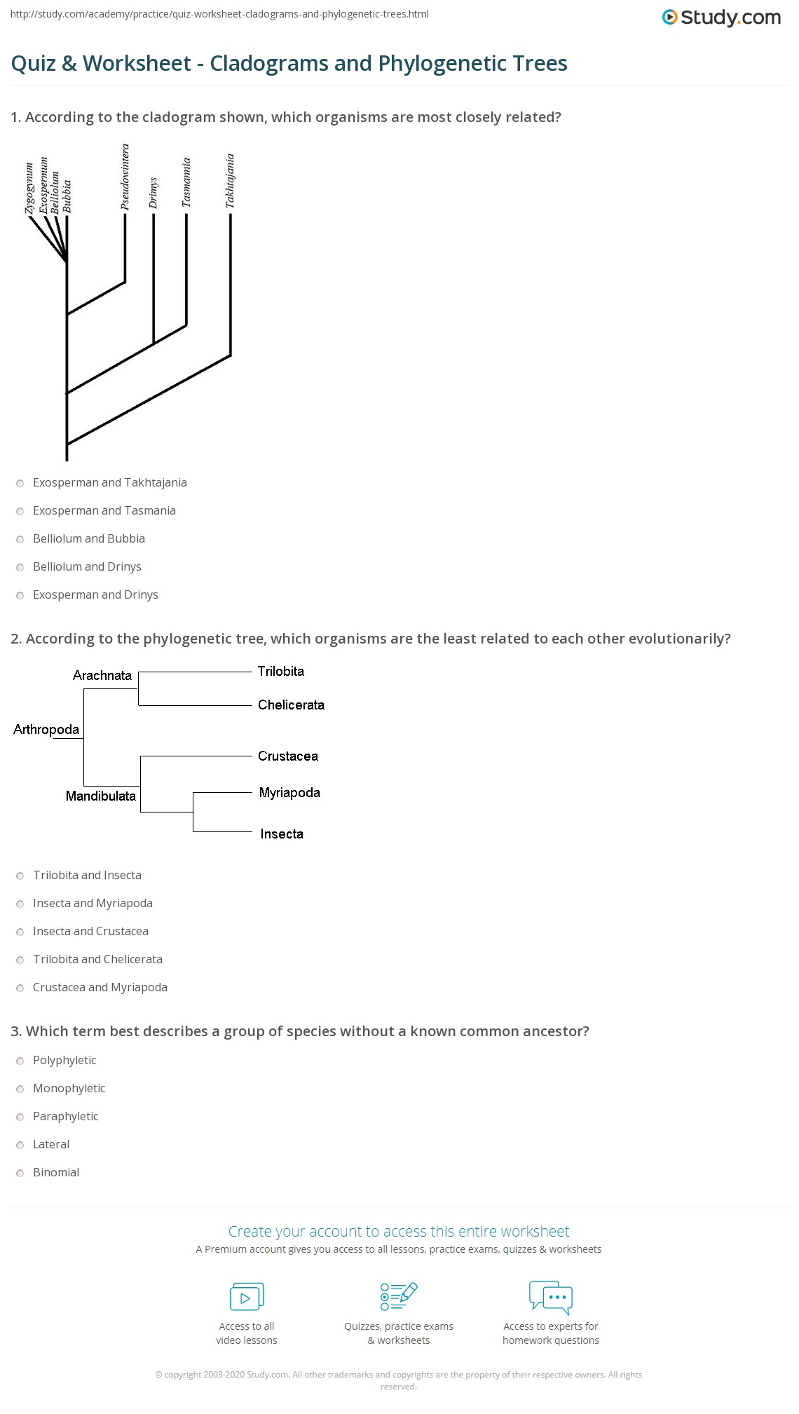 Worksheet Cladogram Worksheet Worksheet Fun Worksheet
