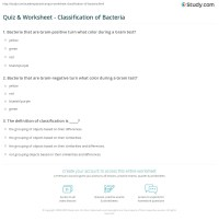Quiz & Worksheet - Classification of Bacteria | Study.com