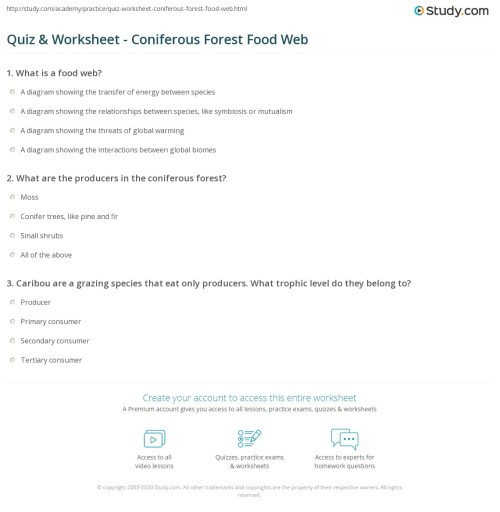 small resolution of print the coniferous forest food web worksheet