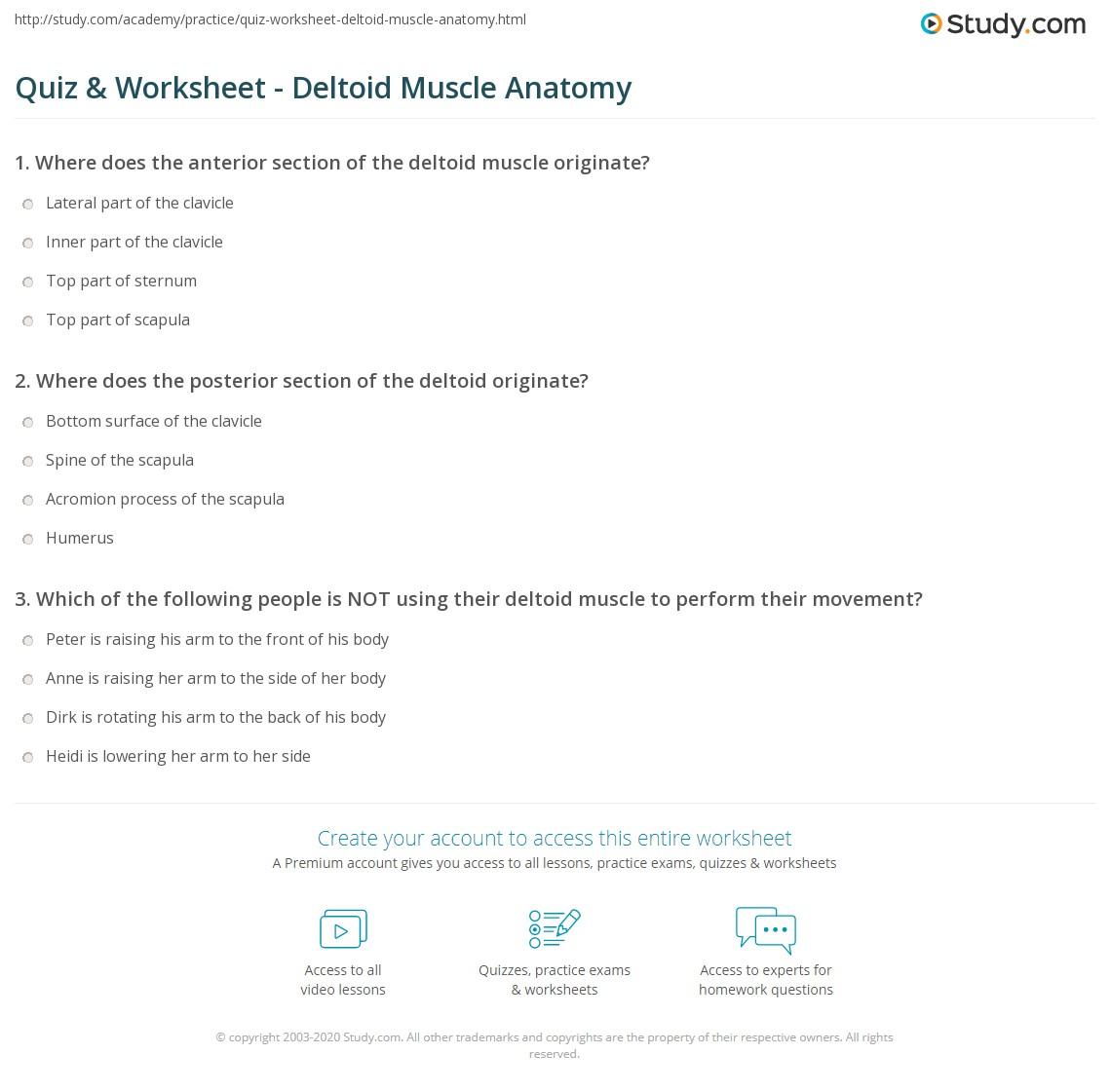 Anatomy Spine Worksheet