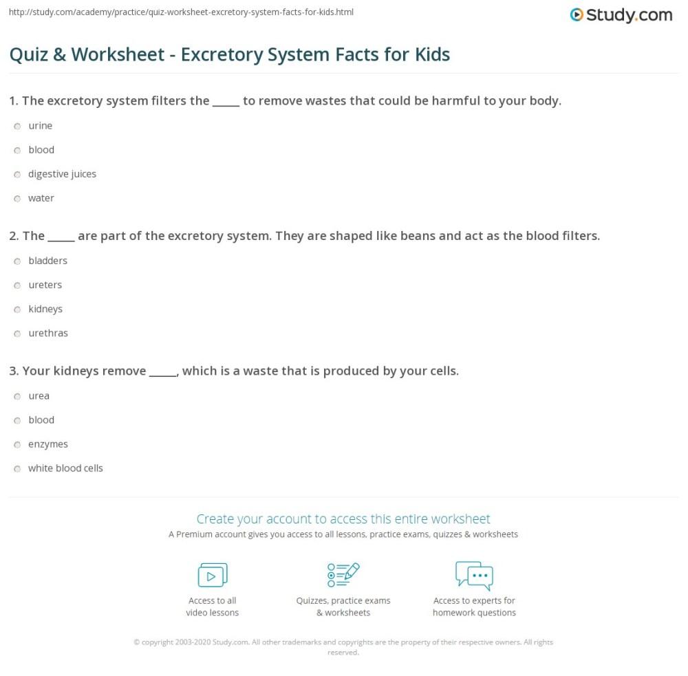 medium resolution of Quiz \u0026 Worksheet - Excretory System Facts for Kids   Study.com