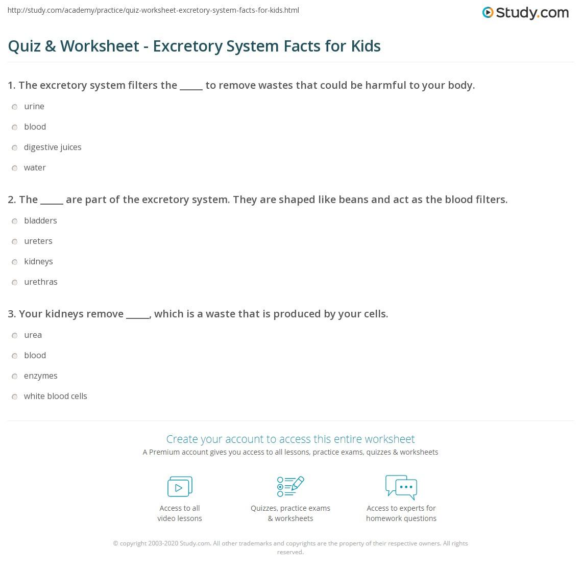 hight resolution of Quiz \u0026 Worksheet - Excretory System Facts for Kids   Study.com