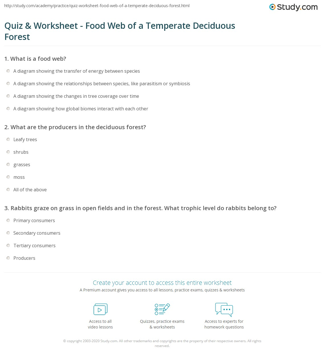 temperate forest food web diagram ant nest quiz and worksheet of a deciduous