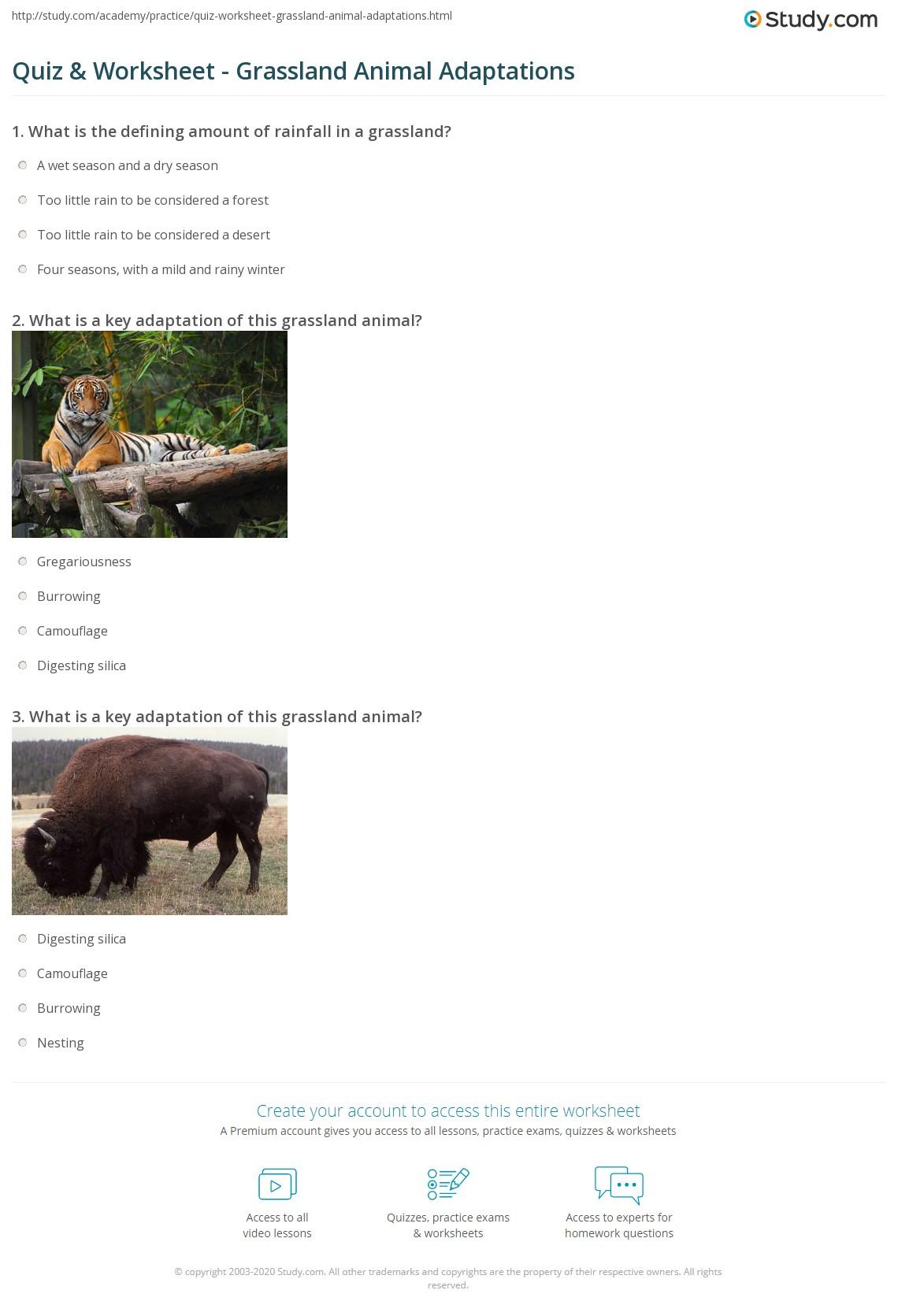 Worksheet Animal Adaptations Worksheets Worksheet Fun