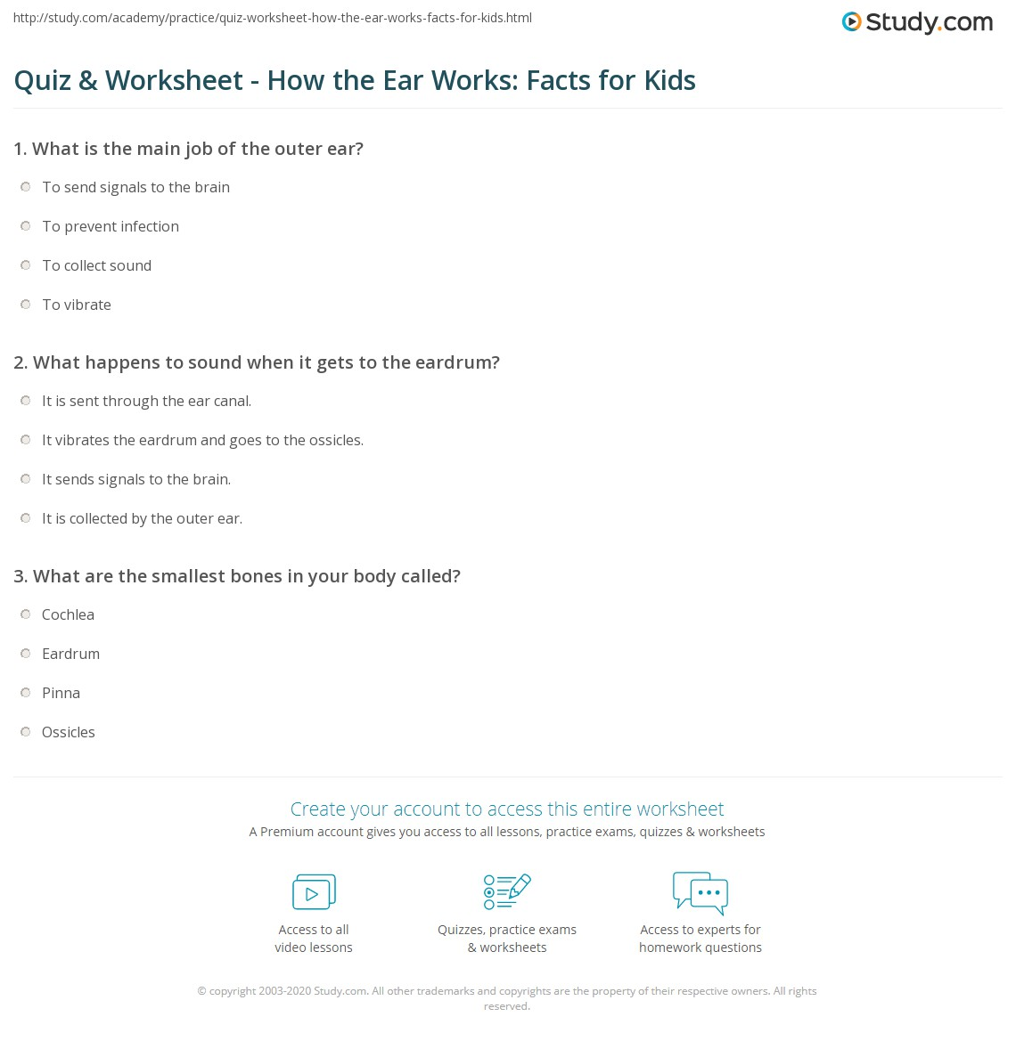 hight resolution of print how the ear works lesson for kids parts facts worksheet