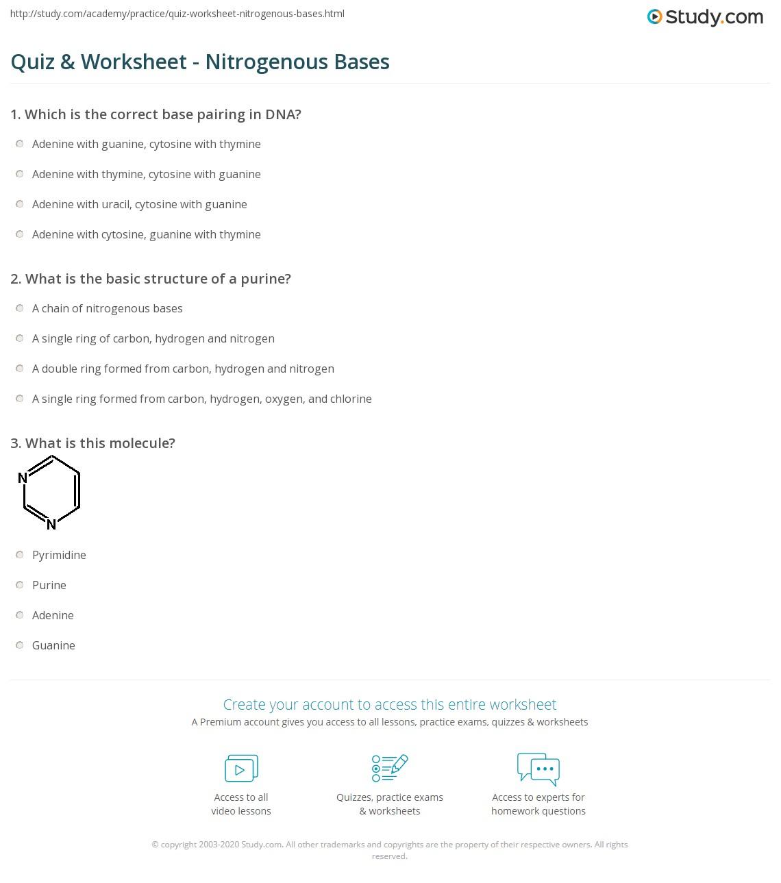 Nitrogen Base Sequence Worksheet