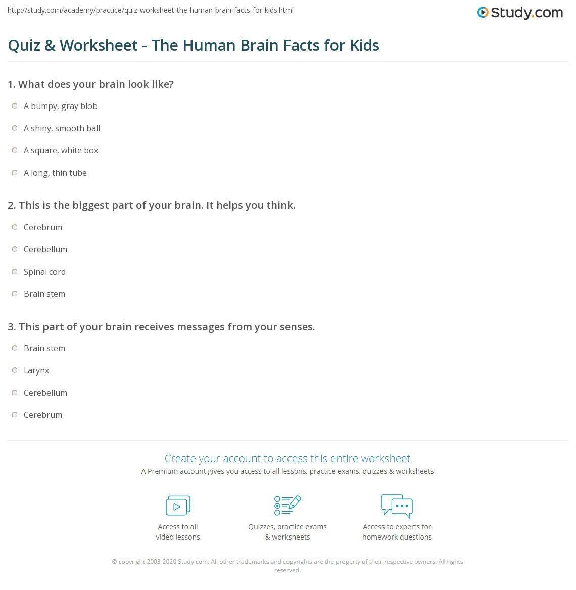 hight resolution of Quiz \u0026 Worksheet - The Human Brain Facts for Kids   Study.com