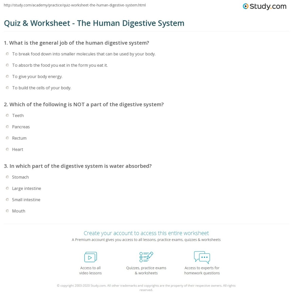 medium resolution of 34 The Human Digestive System Worksheet Answers - Worksheet Project List
