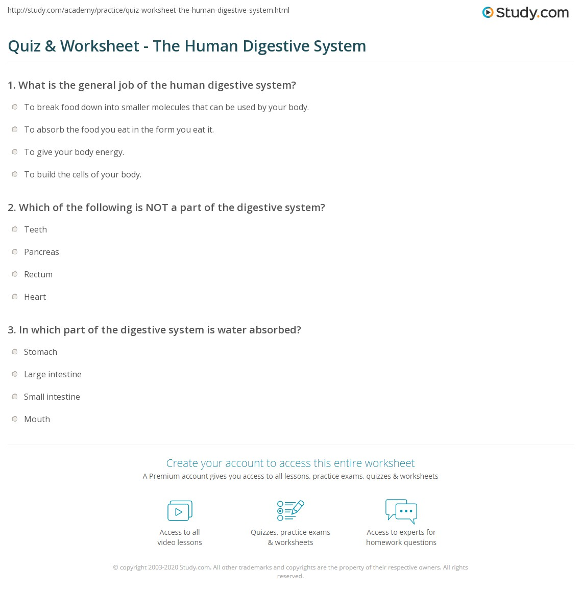 hight resolution of 34 The Human Digestive System Worksheet Answers - Worksheet Project List