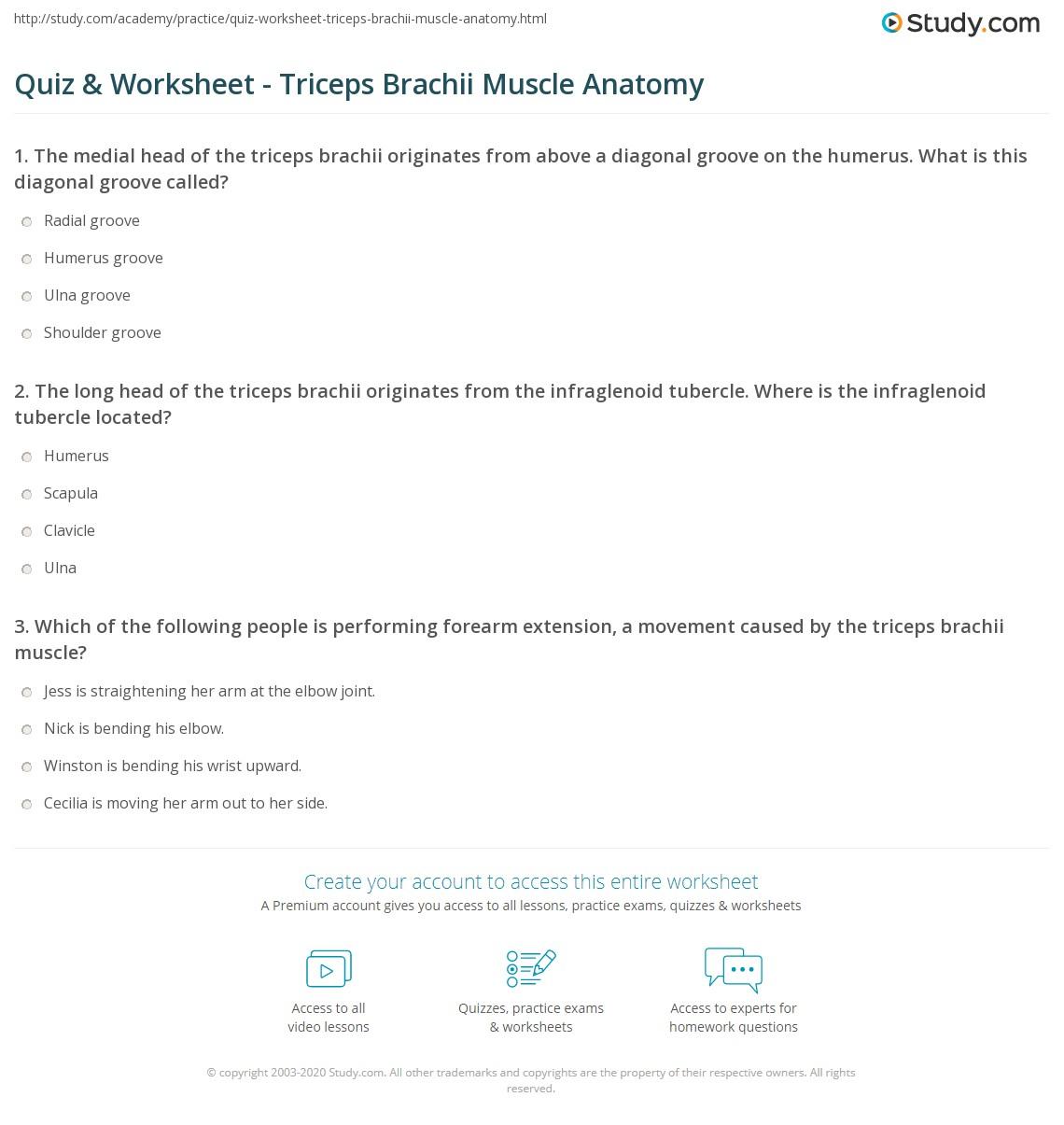 Blank Muscle Worksheet For Anatomy