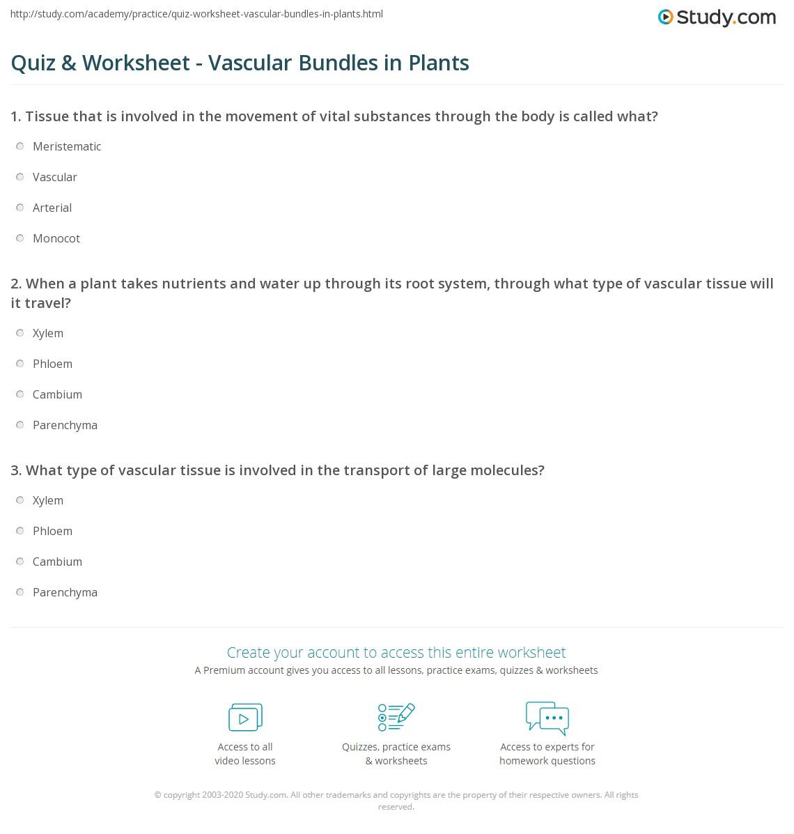 Worksheet On Vascular Tissue In Plants