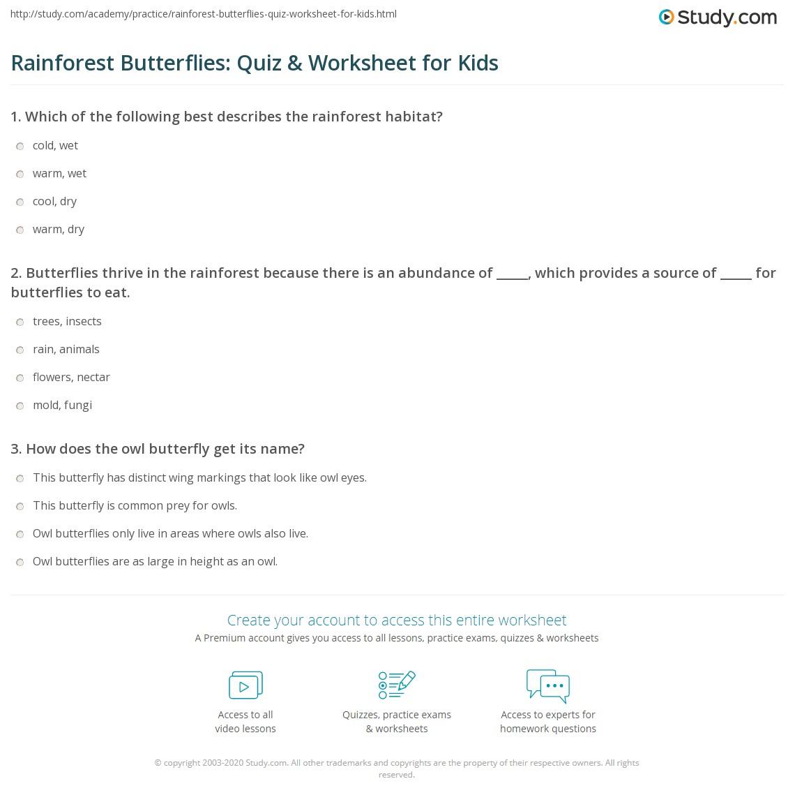 Rainforest Butterflies Quiz Amp Worksheet For Kids