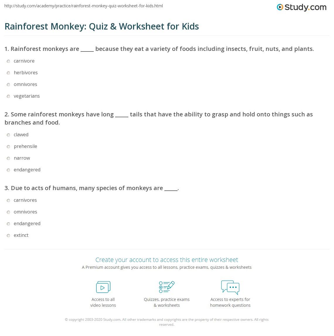 Rainforest Monkey Quiz Amp Worksheet For Kids