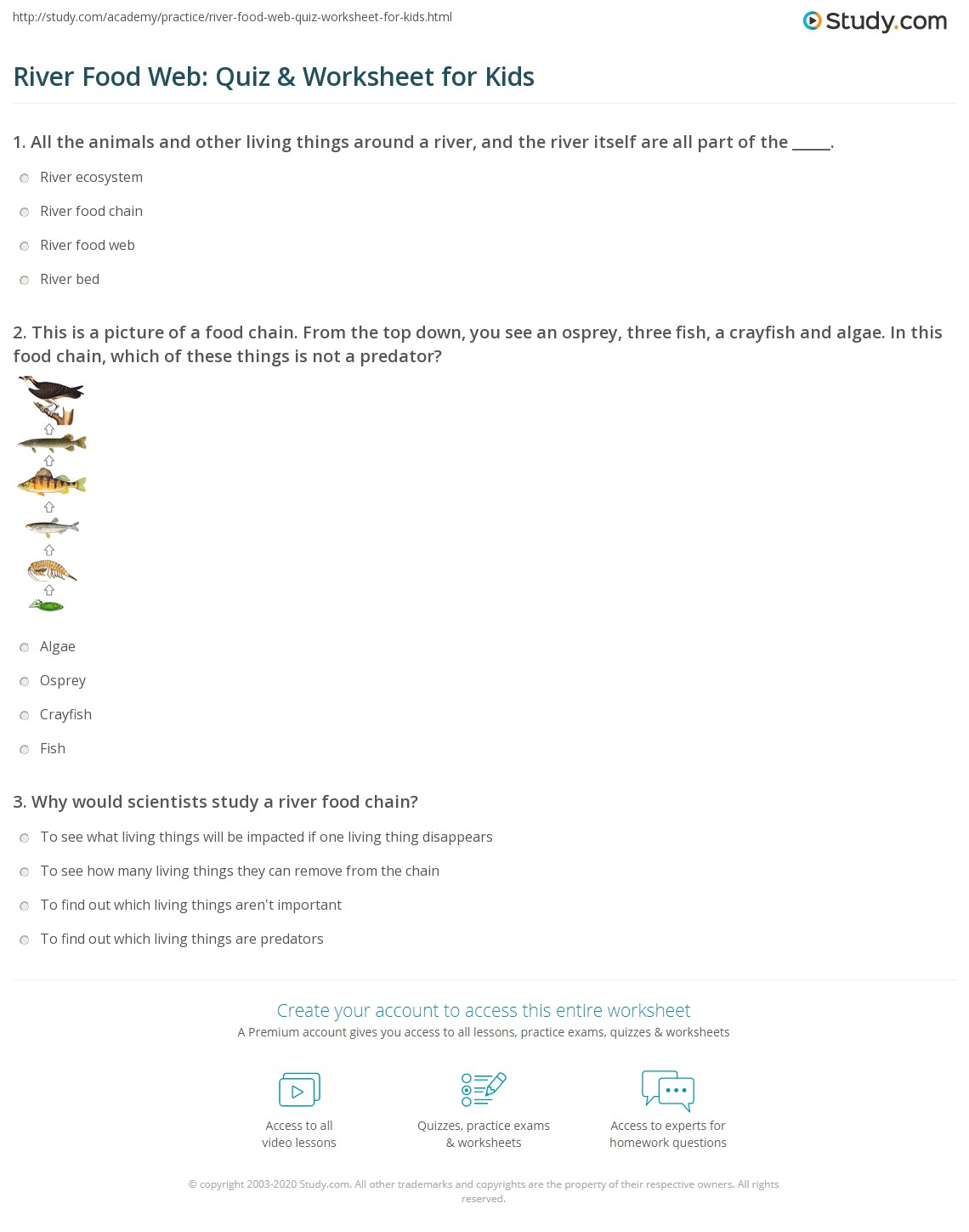 River Food Web Quiz Amp Worksheet For Kids