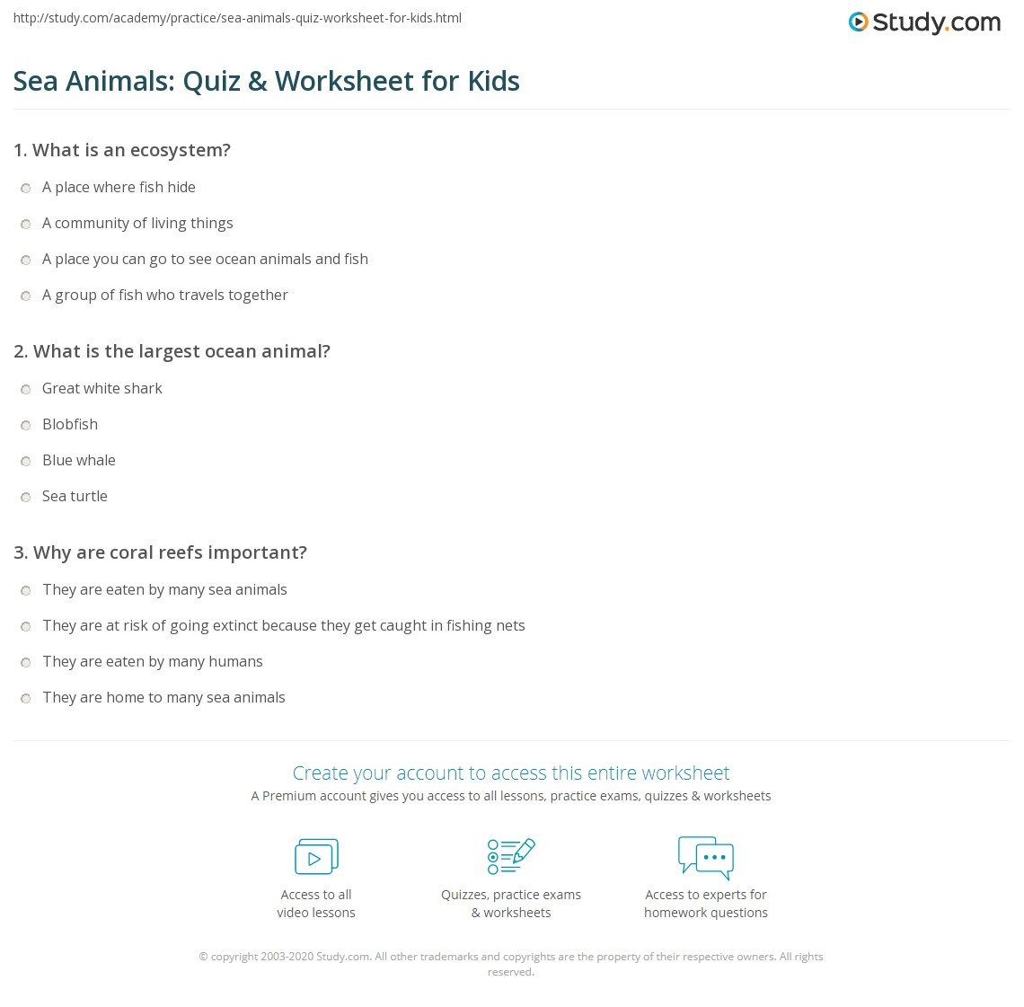 Sea Animals Quiz Amp Worksheet For Kids