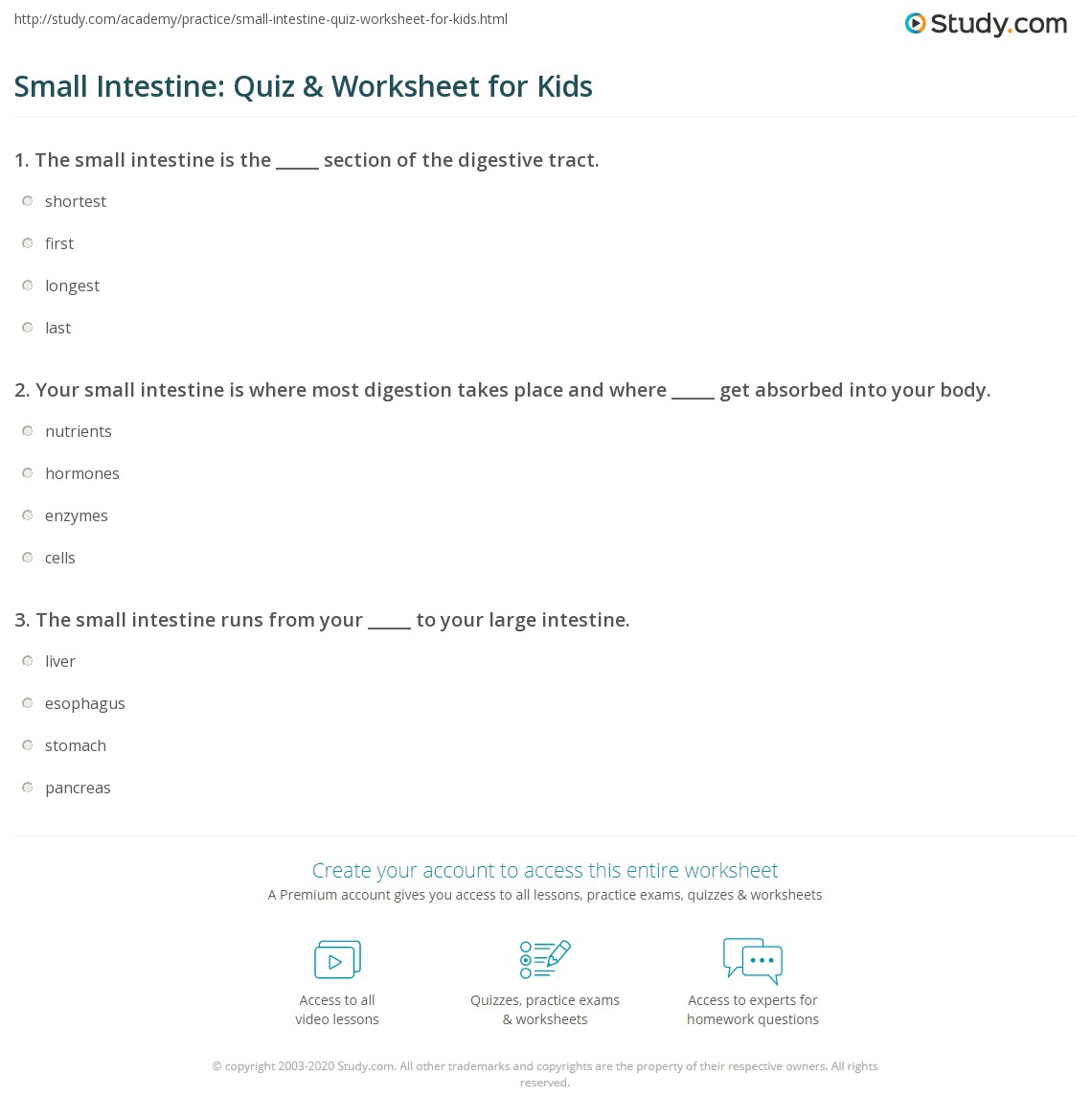 Small Intestine Quiz Amp Worksheet For Kids