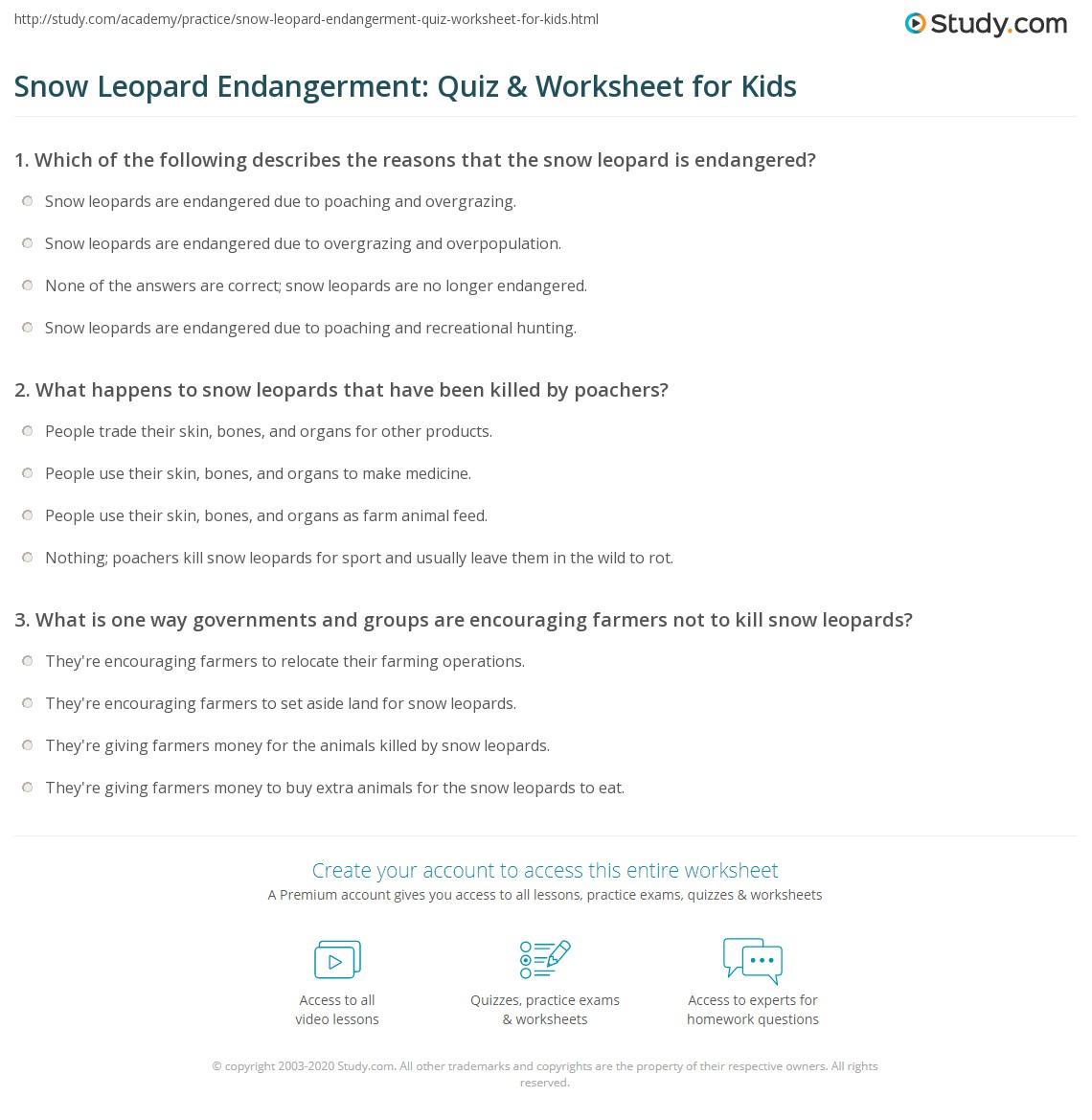 Snow Leopard Endangerment Quiz Amp Worksheet For Kids
