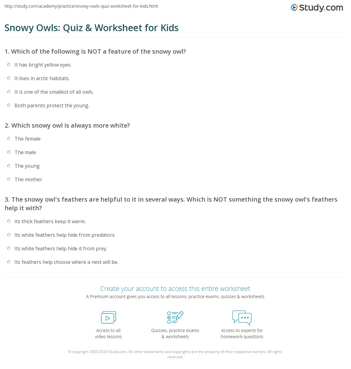 Snowy Owls Quiz Amp Worksheet For Kids