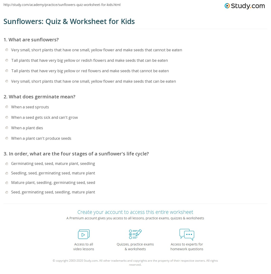 Sunflowers Quiz Amp Worksheet For Kids