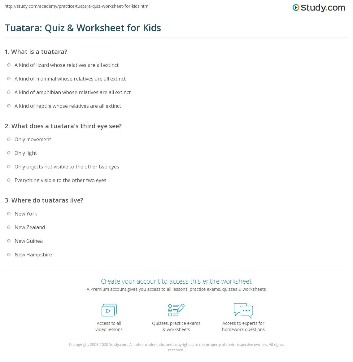 Tuatara Quiz Amp Worksheet For Kids