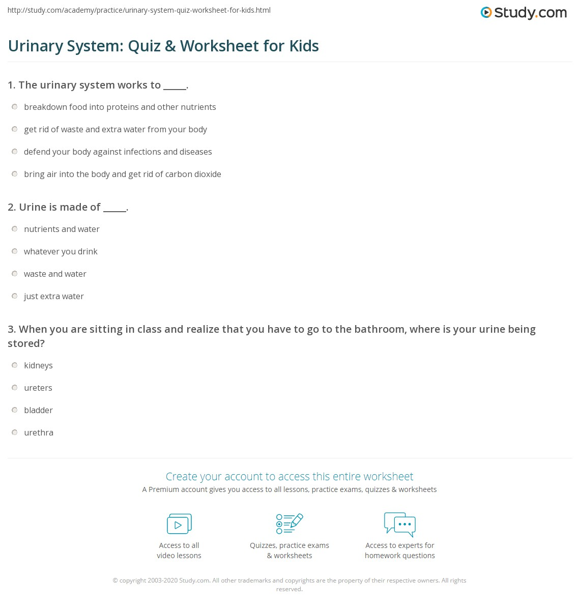 Urinary System Quiz Amp Worksheet For Kids